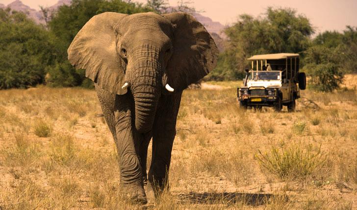 Luxury wildlife holidays in Namibia