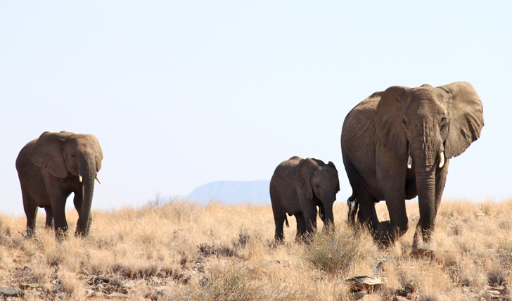 Luxury wildlife holidays in Namibia