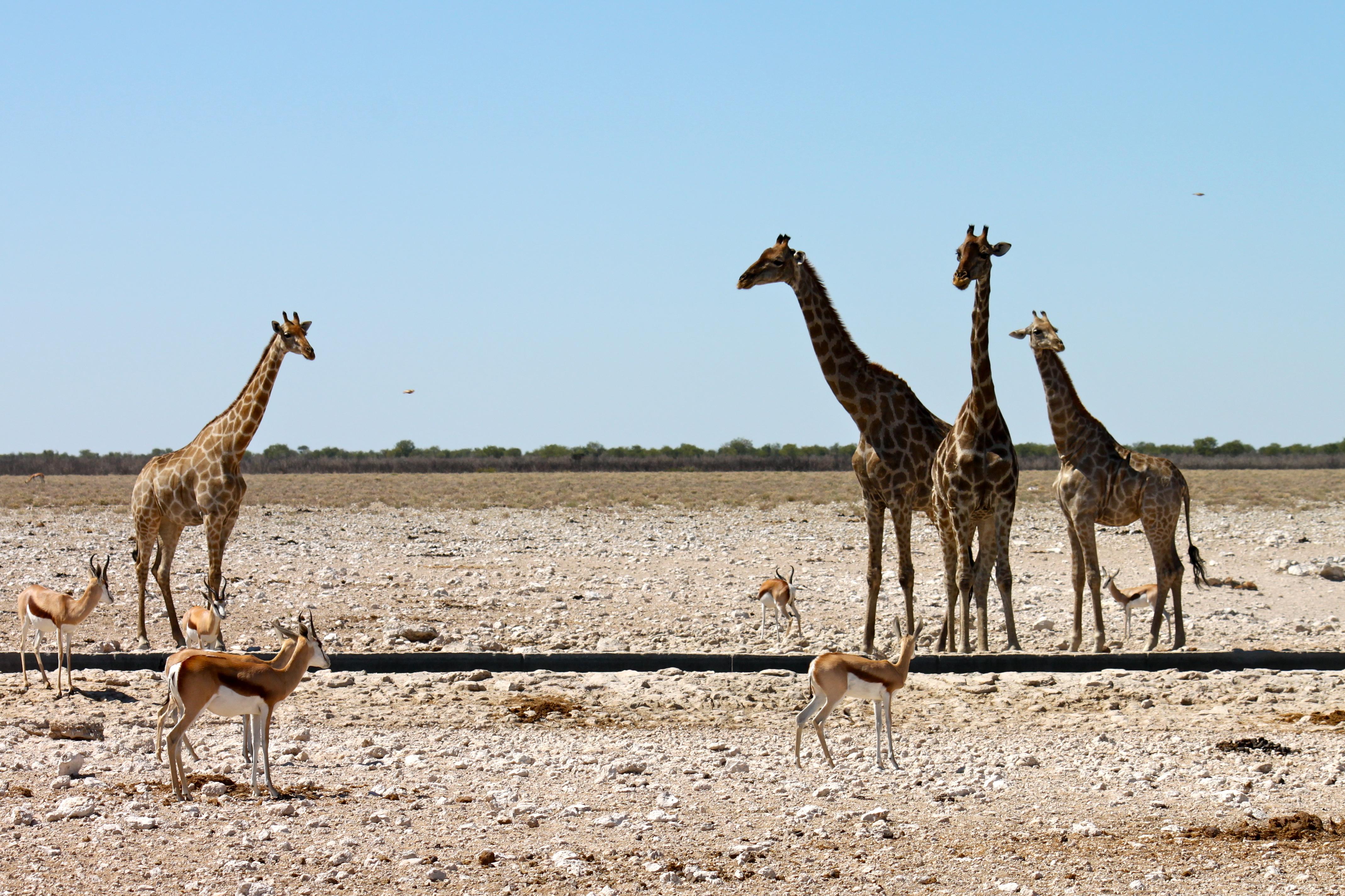 Namibia luxury holidays   Black Tomato