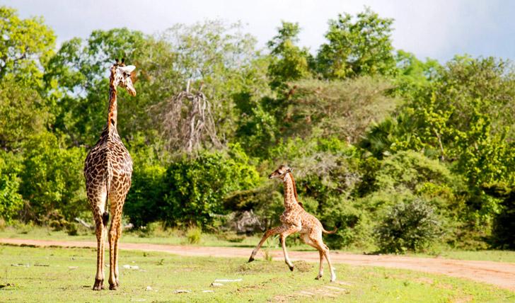 Africa holidays