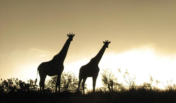 Wildlife in Tswalu, South Africa