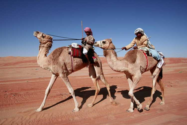 Camel riding, Oman
