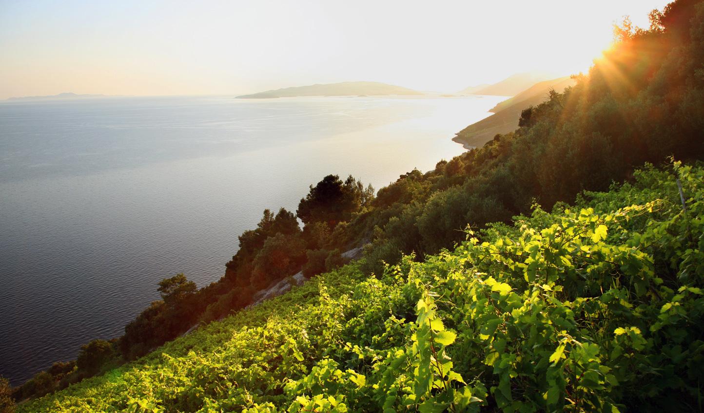 Sip organic wines in Ponikve