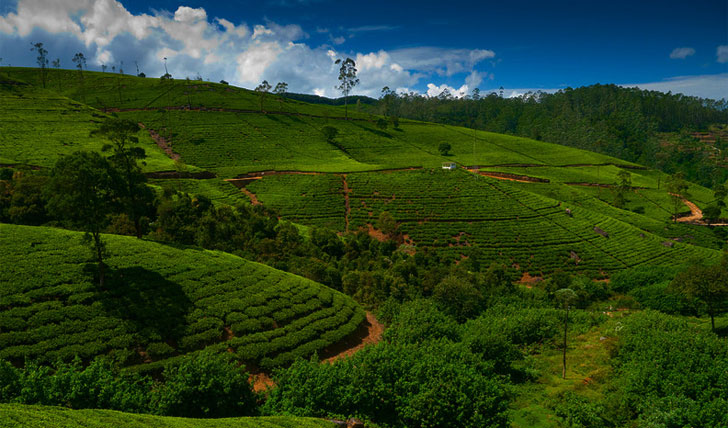 Roam the lush countryside of Sri Lanka