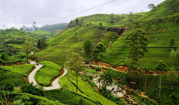 The highland tea trails of Sri Lanka