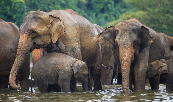 elephant house repositioning strategy in sri lanka The southwestern portion of sri lanka estimated to be between 2,440 and 3,350 for the sumatran elephant and 3,160 and 4,400 for the sri lankan elephant.