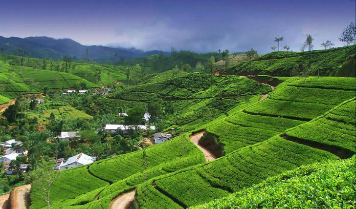 Sri Lanka's natural wonders