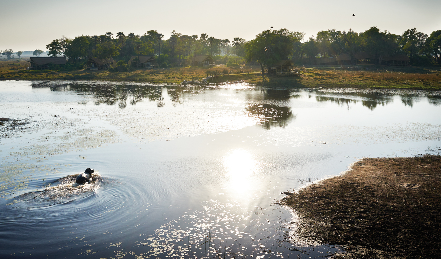 Stay in the heart of the awe-inspiring Okavango Delta