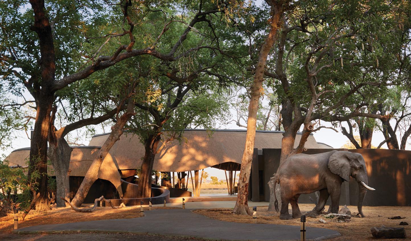 Your safari adventure begins here