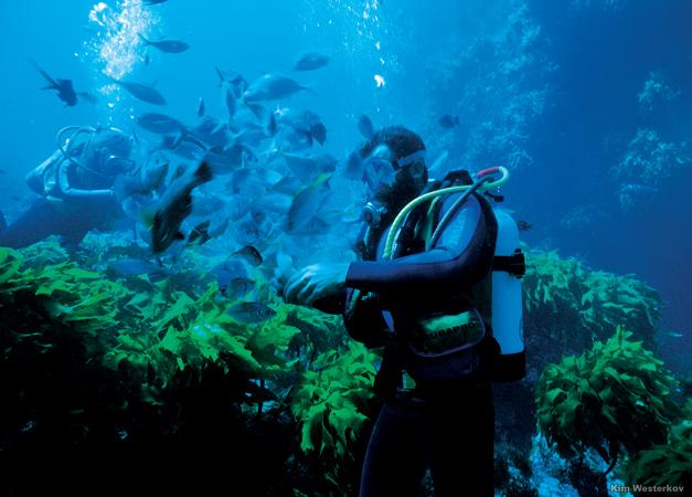 Deep Sea Diving: Careers In Deep Sea Diving