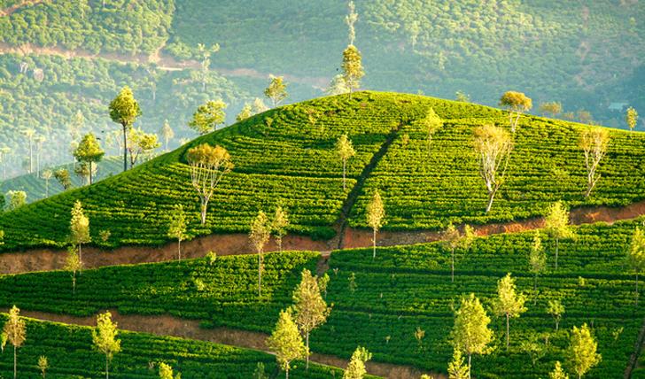 Luxury trip to Sri Lanka   Black Tomato