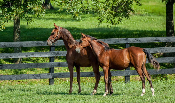 Beautiful horses in Kentucky
