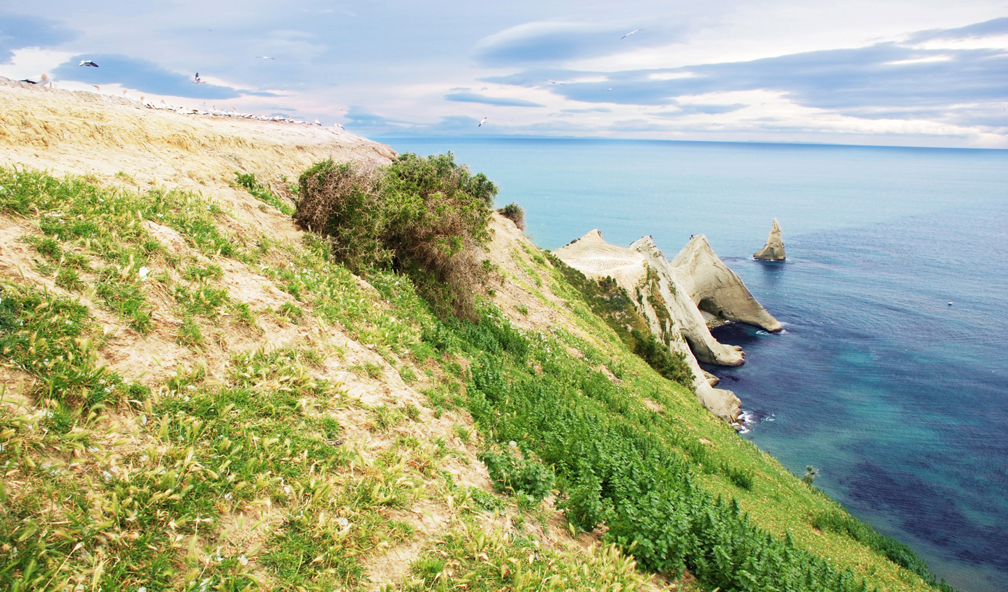 Explore the North Island's stunning coastlines