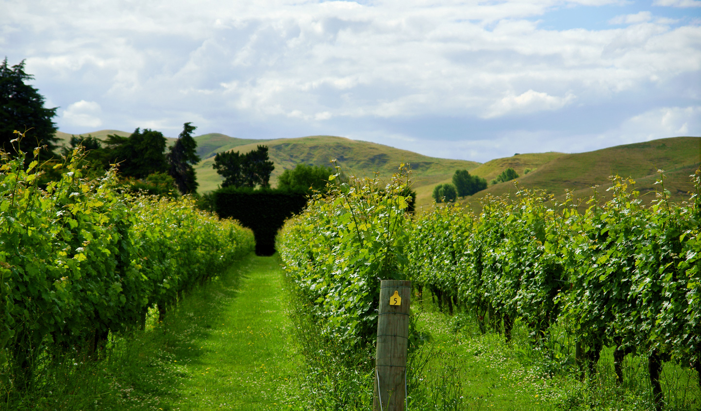 Sample the island's finest wines in Hawke's Bay