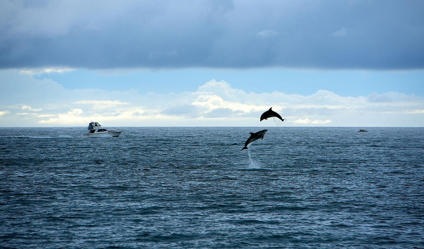 Bigstock-Dolphins-greetings