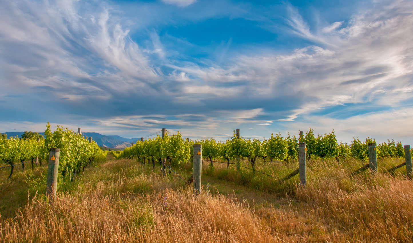 Dramatic skies above rolling vineyards