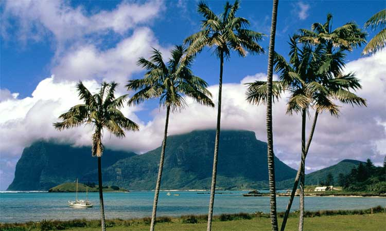 palm trees of Lord Howe