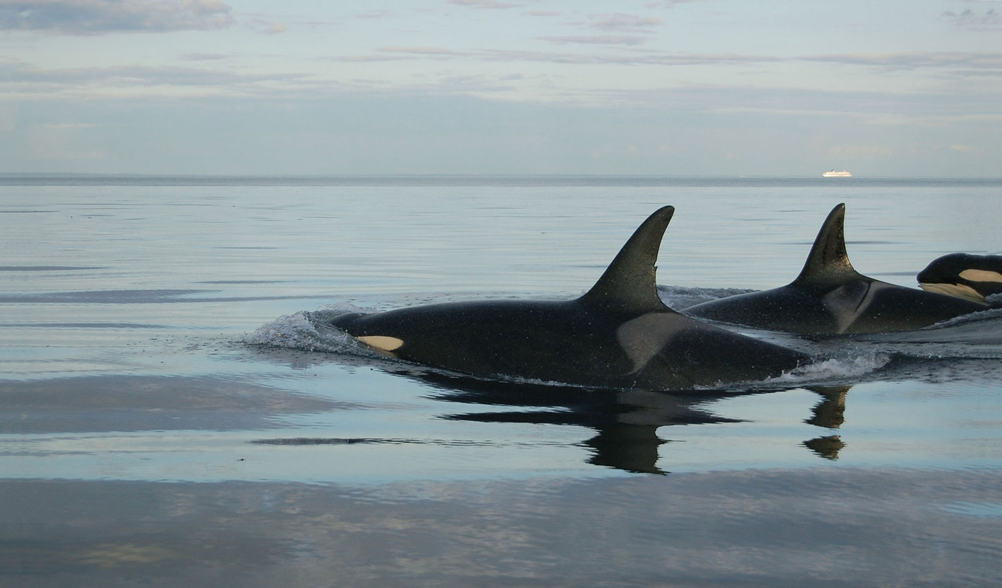 Experience the wildlife rich waters off of Vancouver