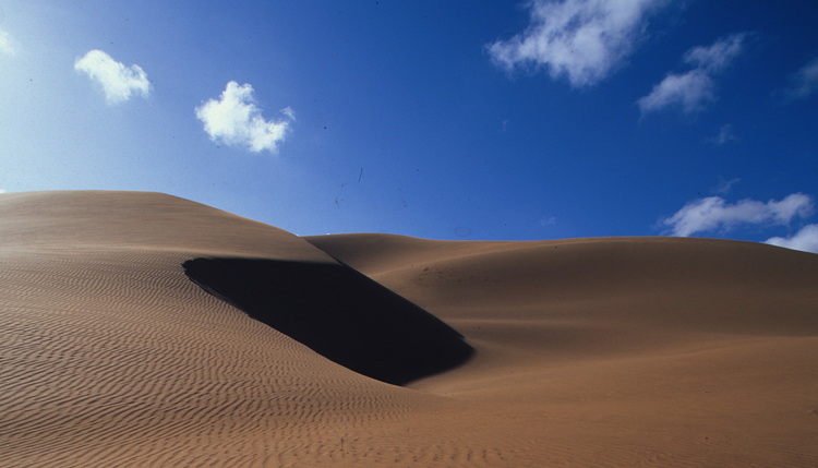 Traverse The Dunes By Camel
