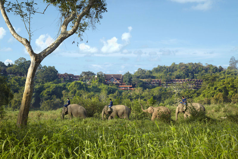 A land where elephants roam free