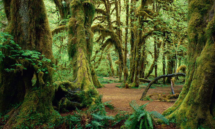 deep colours of olympic national park