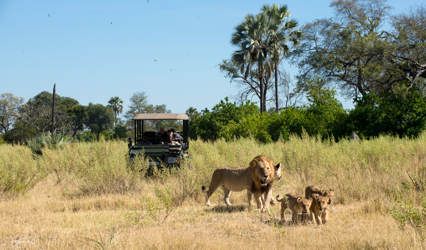 Spot the Big Five out on a game drive