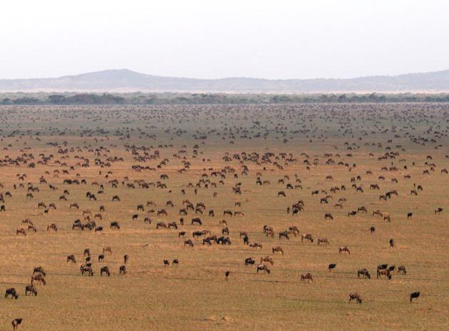 safari with a twist