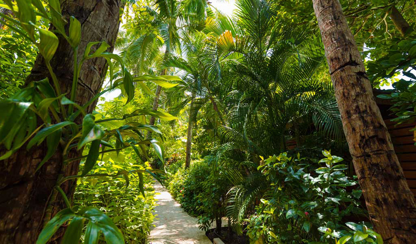 Wander the luscious garden paths