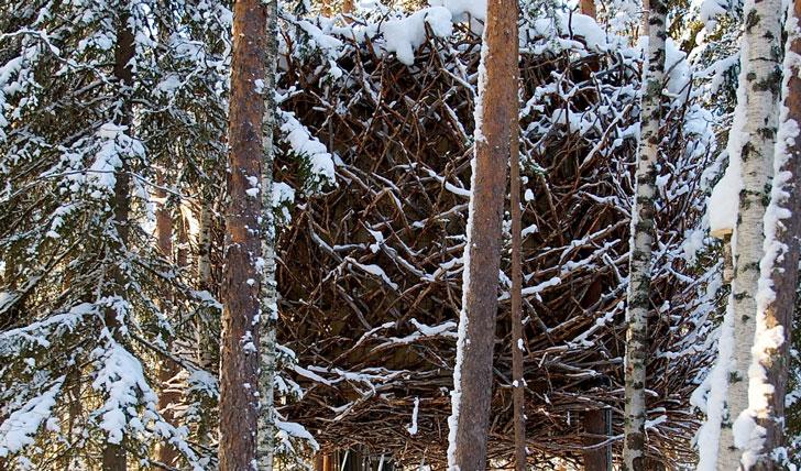 The birds nest room, TreeHotel Lulea
