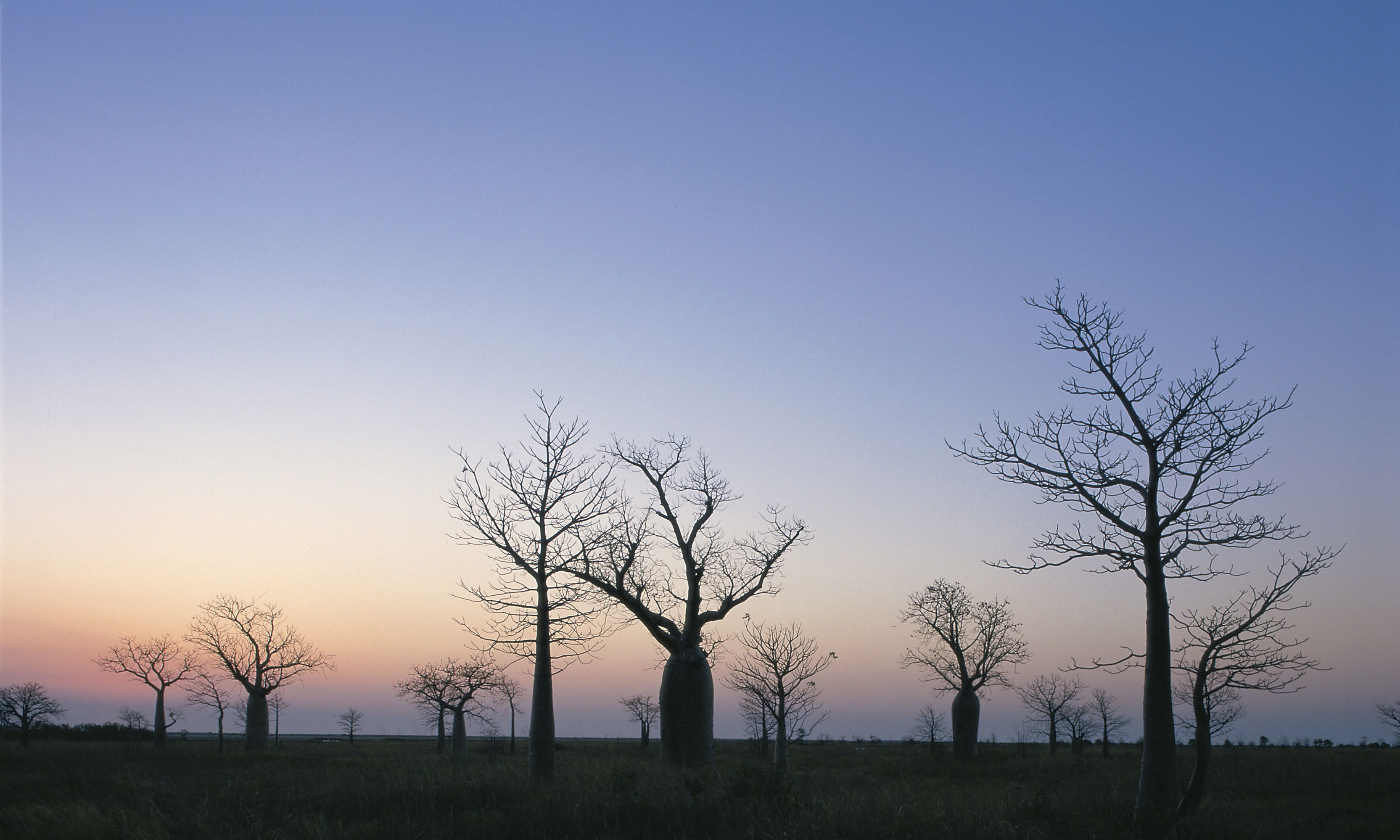 stark landscapes