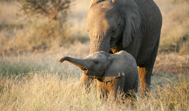 Awe at baby elephants in the Sabi Sands
