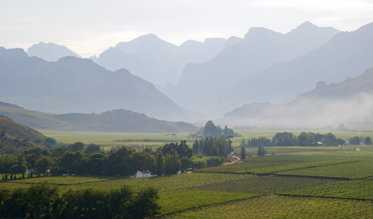 Indulge in the winelands