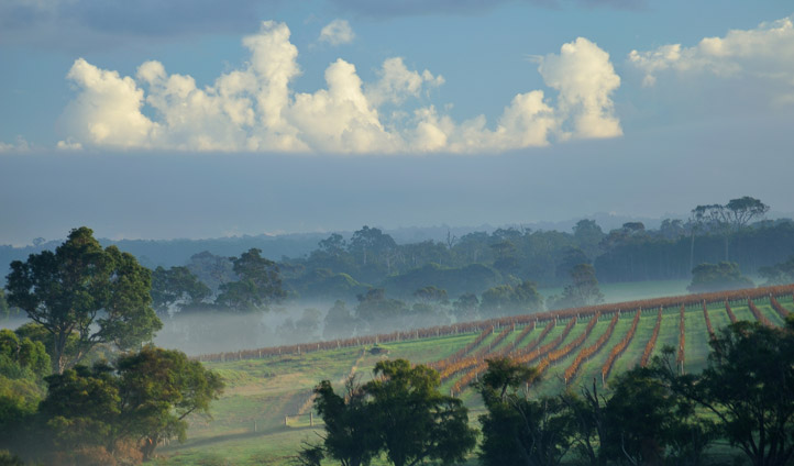 Discover a world of wine in Margaret River