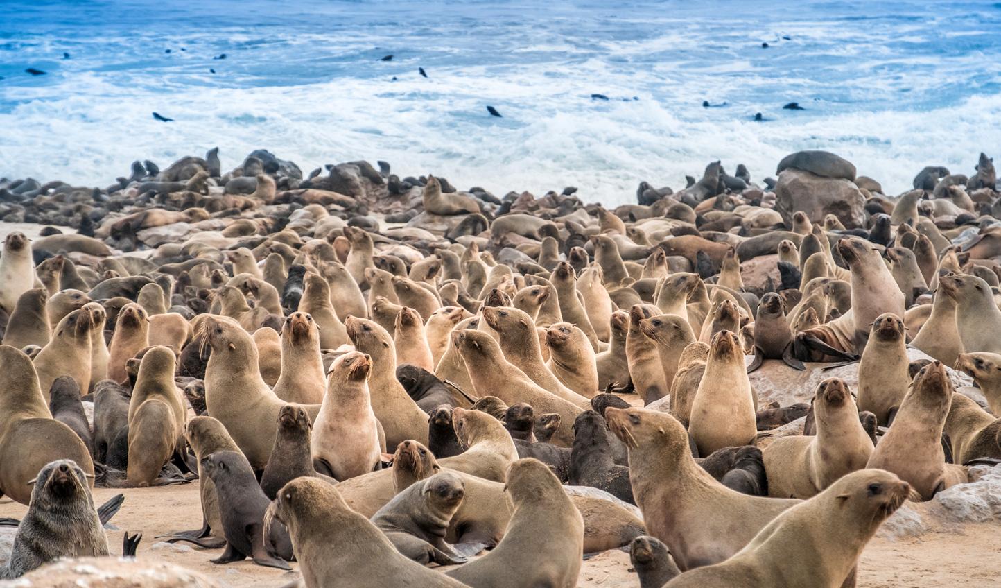 Meet the seal colony of Mowe Bay