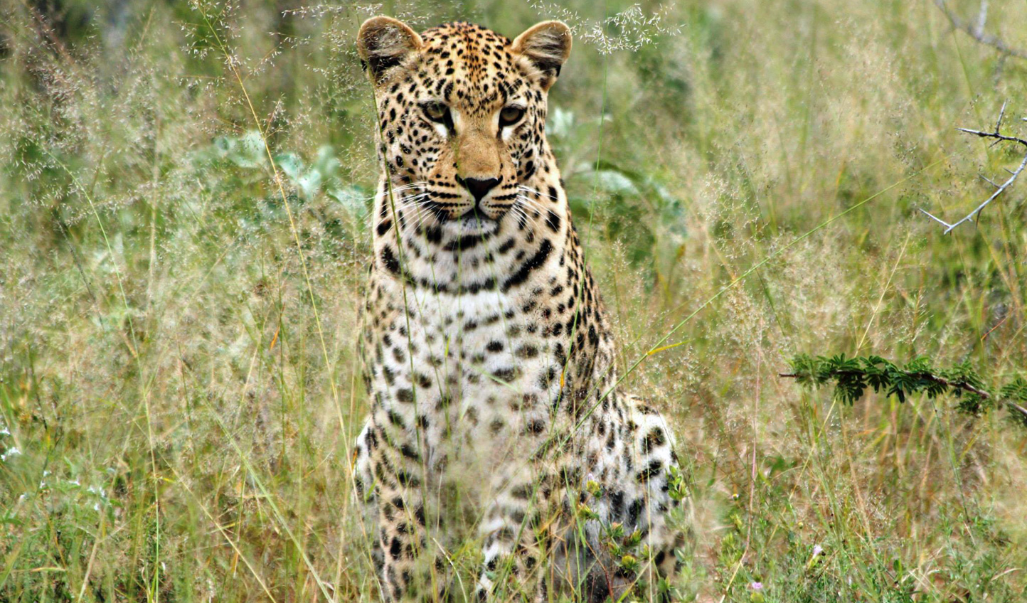 Get involved with the AfriCat Foundation