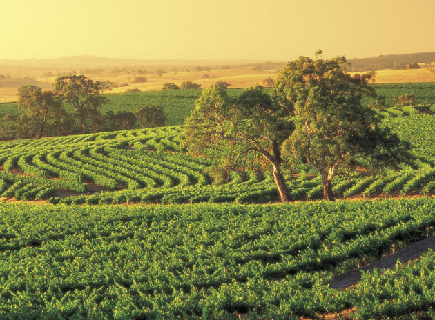 Get the low down on South Australia's wine regions