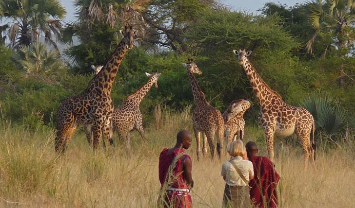 Chem Chem Luxury Safari Holiday