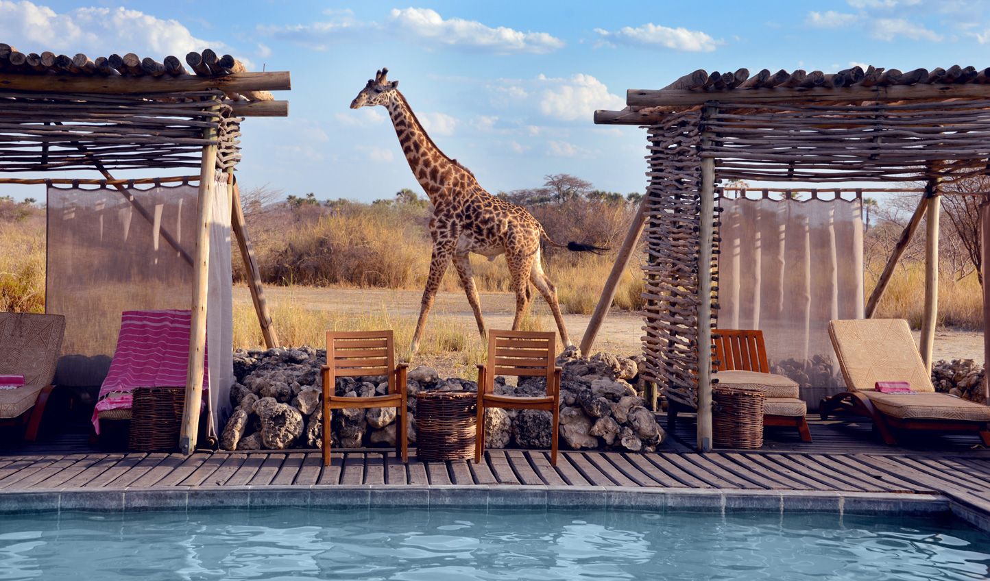 Swim a few laps with an audience of giraffes