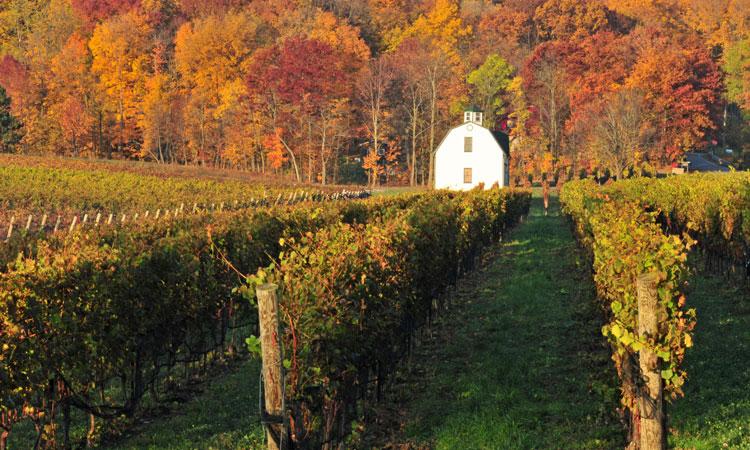 Niagara Falls winery