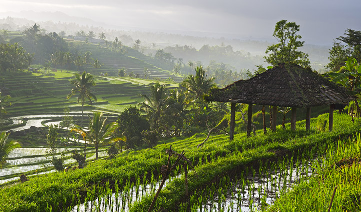 Rice terraces, Ubud, Indonesia | Black Tomato