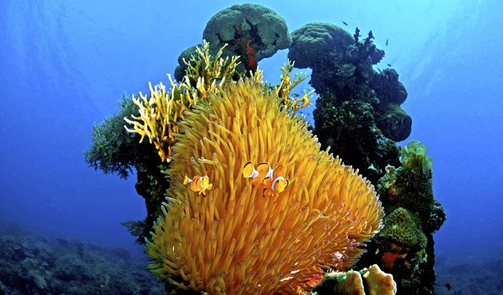 Scuba diving at Kura Kura Indonesia