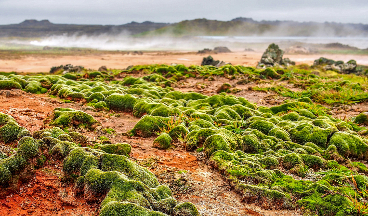 Traverse Iceland's lunar like landscapes, strewn with moss and lava