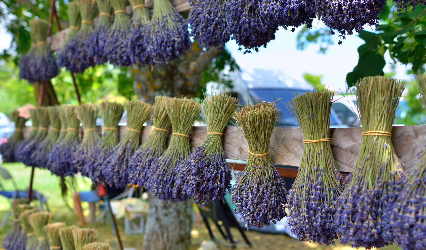The famous dried lavender of Provence
