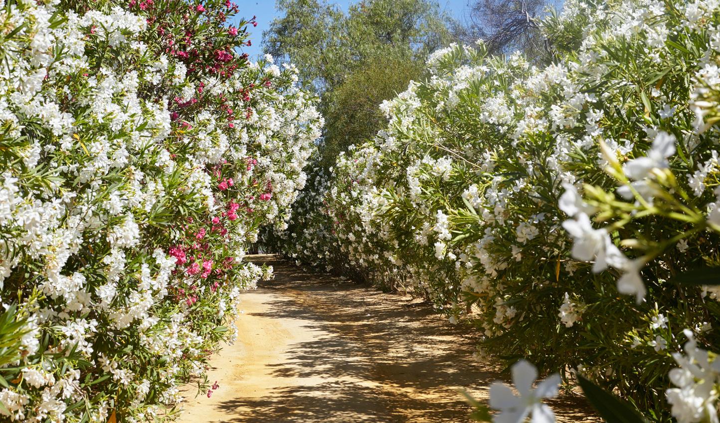 Take a stroll through the beautiful gardens of Hacienda San Rafael