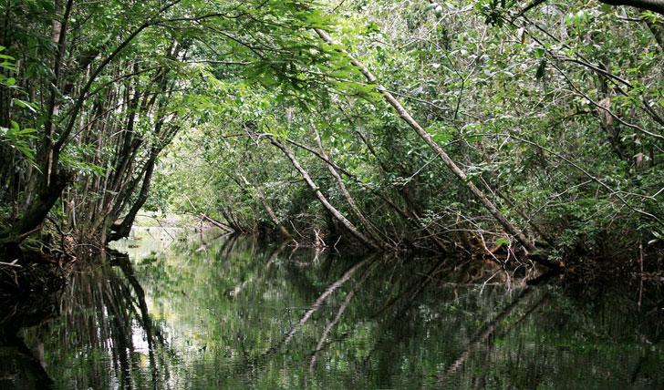 Amazon River Jungle
