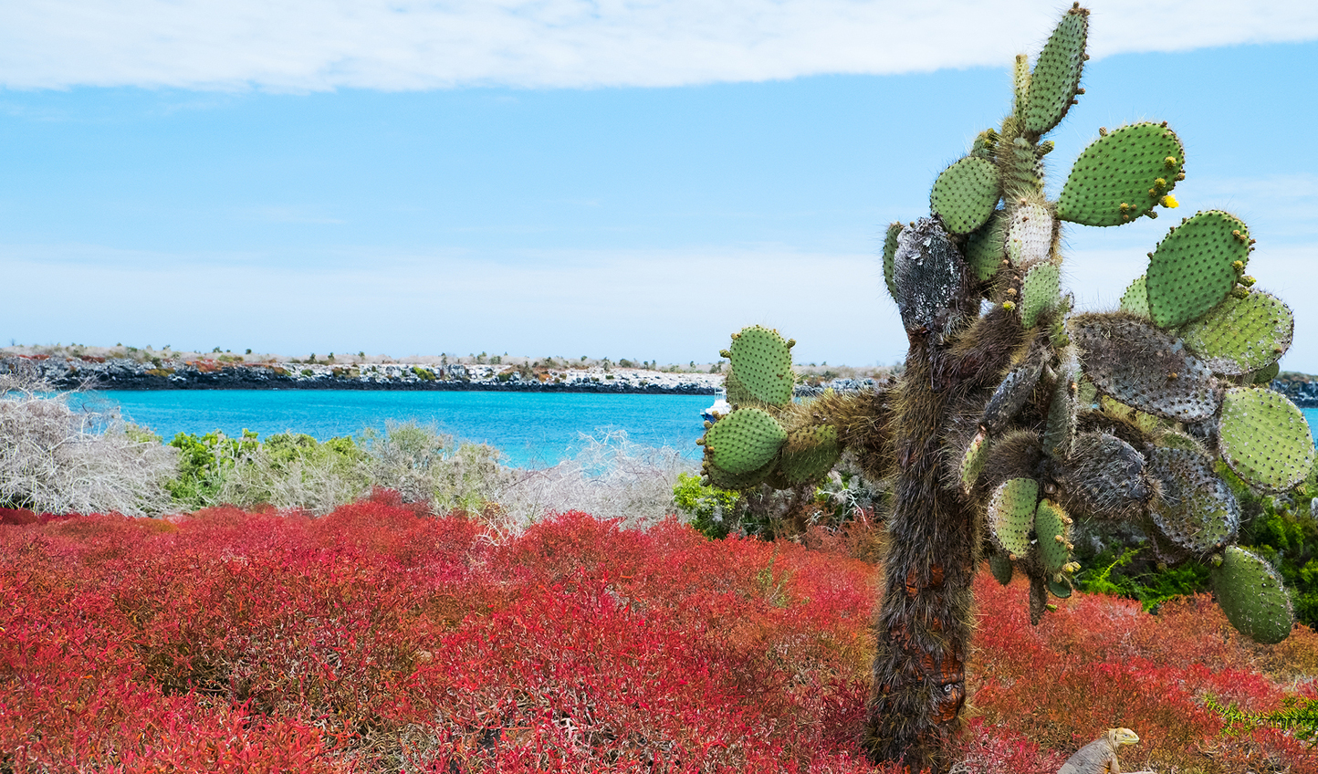 Marvel at stunning landscapes in the Galapagos