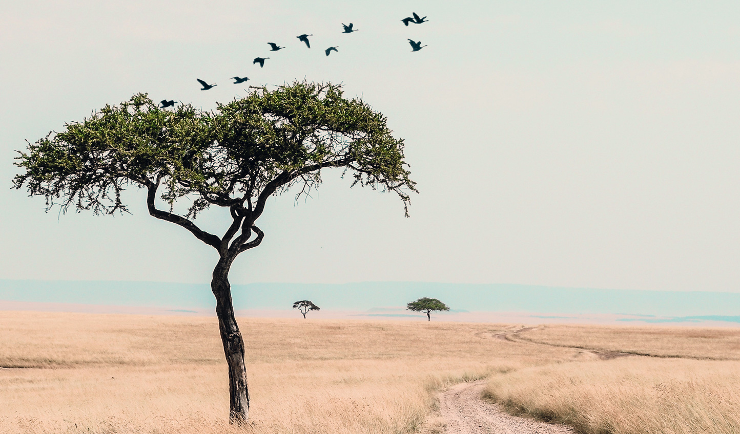 Journey across wide open plains
