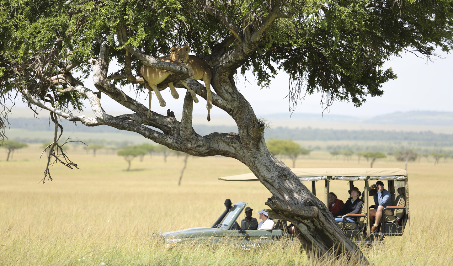 Rumble across the plains on game drives