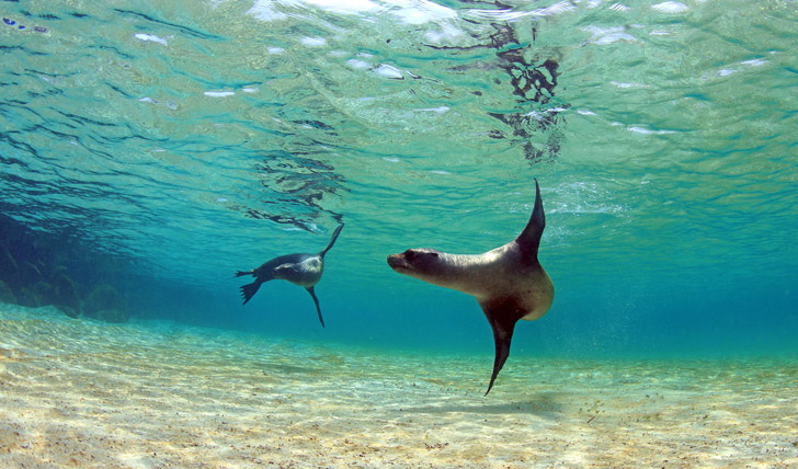 Swim with the friendly seals