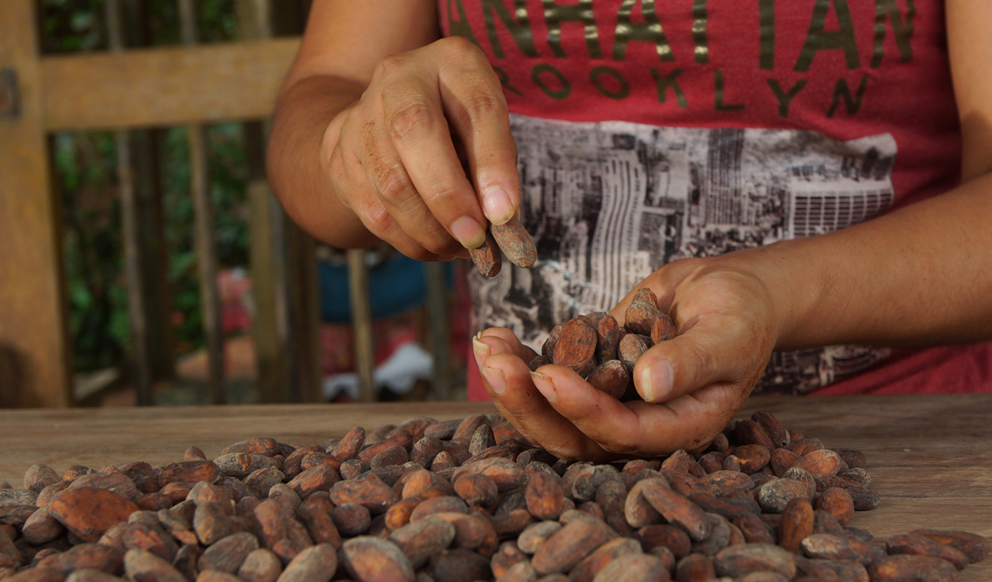 Select the finest cocoa beans for your chocolate experience